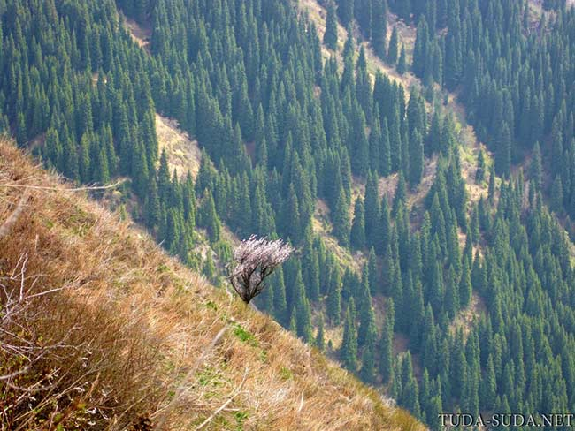 Большое Алматинское озеро как добраться