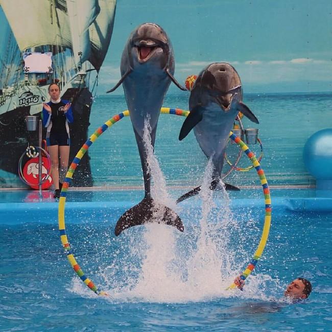 Дельфинарий Пхукет