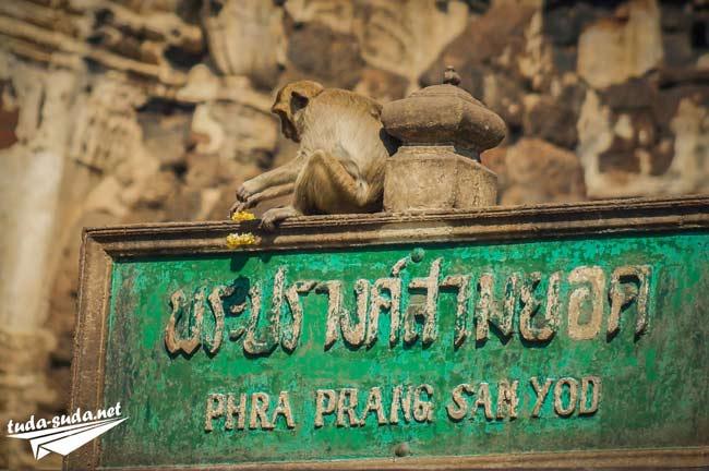 Город обезьян Лопбури