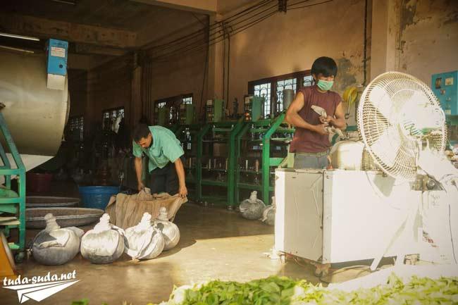 Чайная фабрика фото