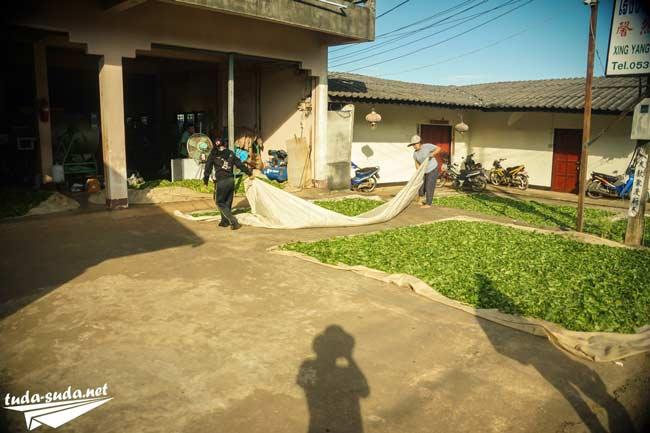 Чайная фабрика Таиланд