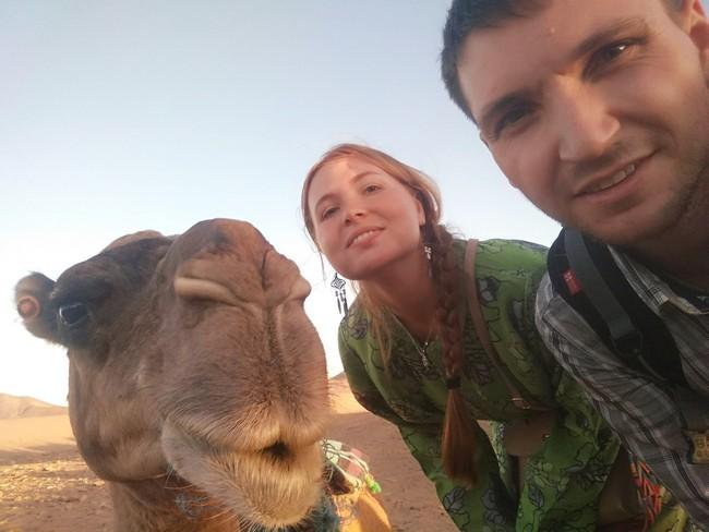 верблюд марокко