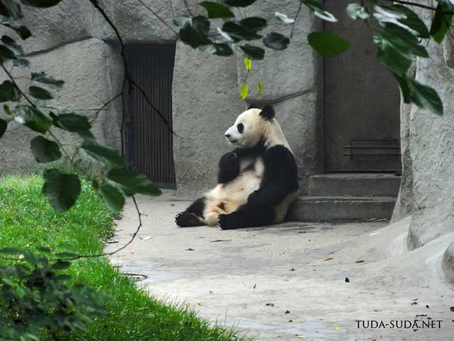 Центр разведения панд