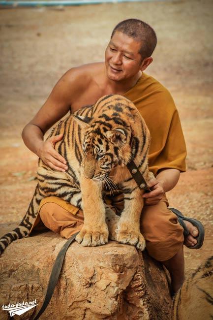 Тигр и монах фото