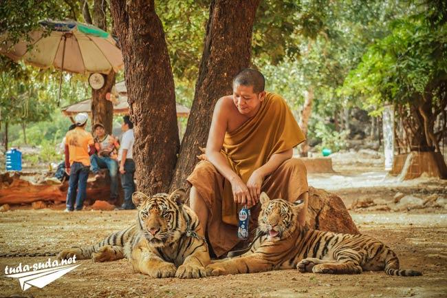 Буддистский монах с тиграми