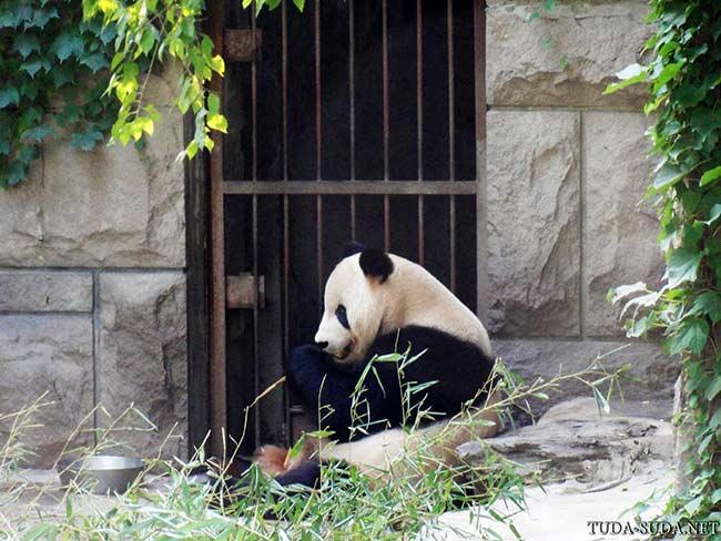 Пекинский зоопарк фото