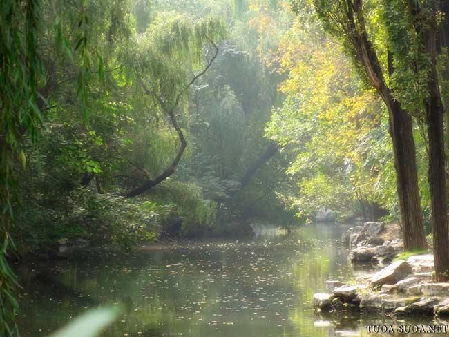 Лес в пекинском зоопарке