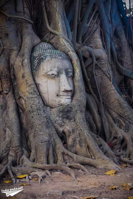 Голова в корнях дерева