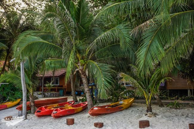 Каяки пальма фото