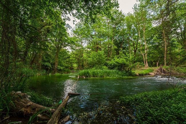 Самурский лес Дагестан