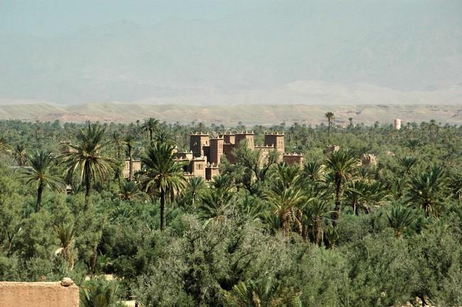 Palmeire Morocco