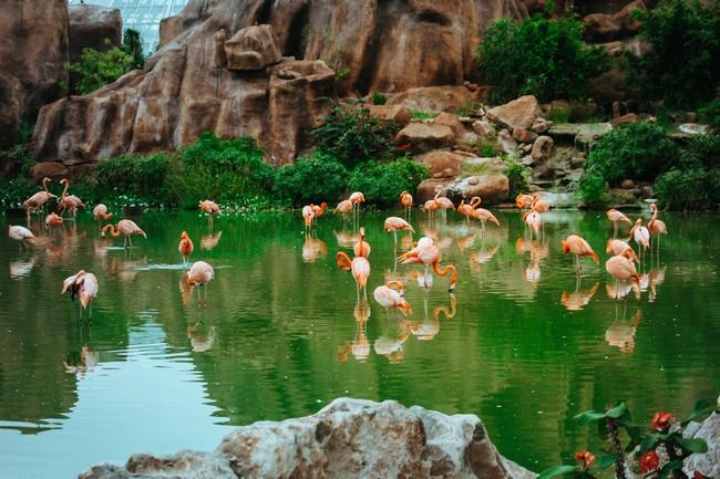 Парк Янг Бай Нячанг Вьетнам