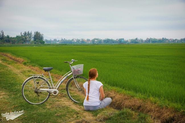 рисовые поля вьетнам