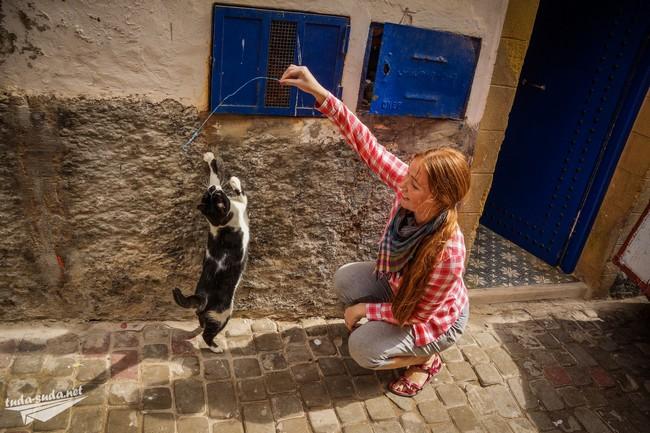 cats Morocco
