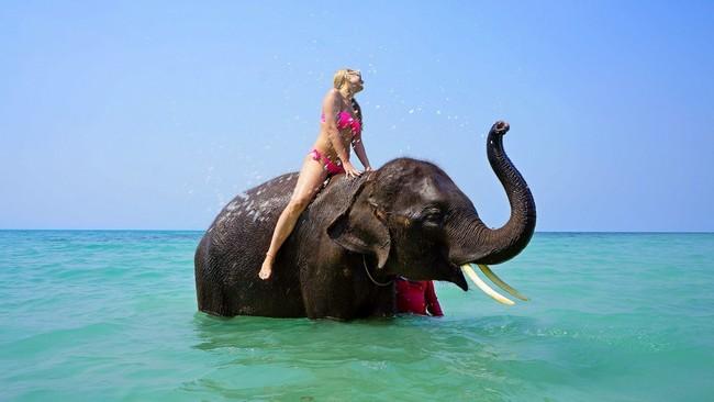 купание со слоном Таиланд