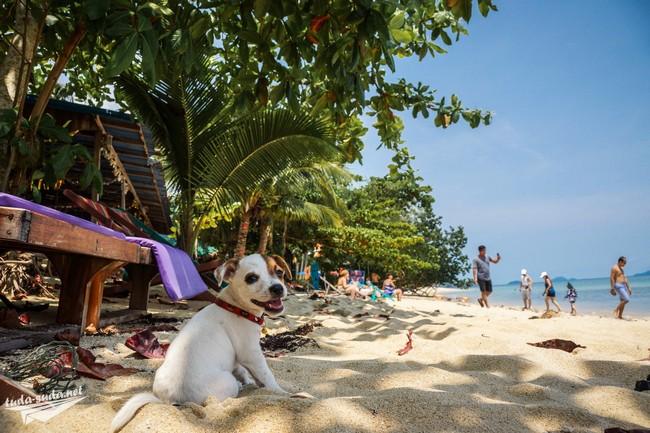 пес на пляже фото
