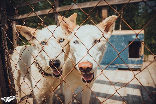 Центр ездовых собак в Листвянке