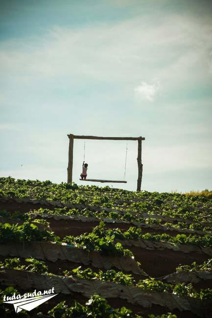 Клубничные фермы Mon Jam