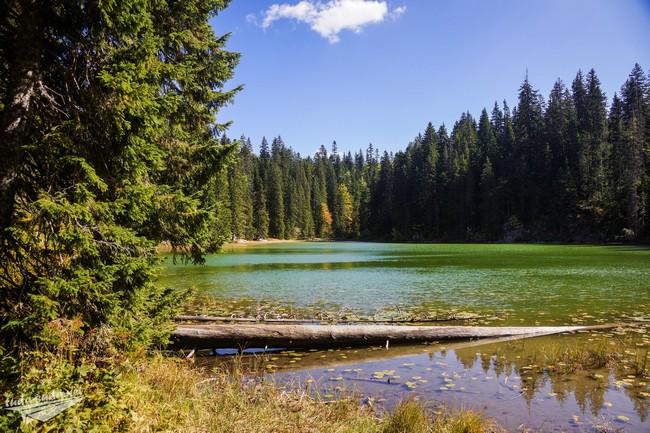 Змеиное озеро парк Дурмитор