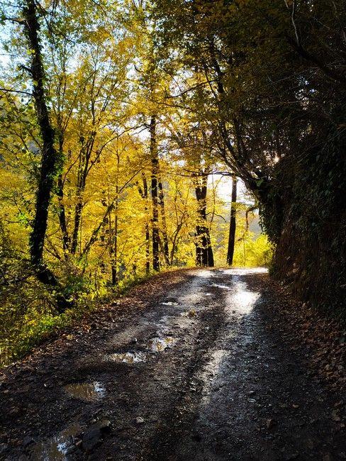Дорога на водопад Ореховский Сочи