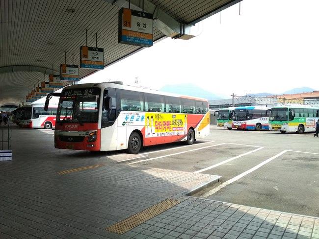 Автобус Корея