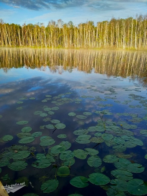 Кувшинки в озере