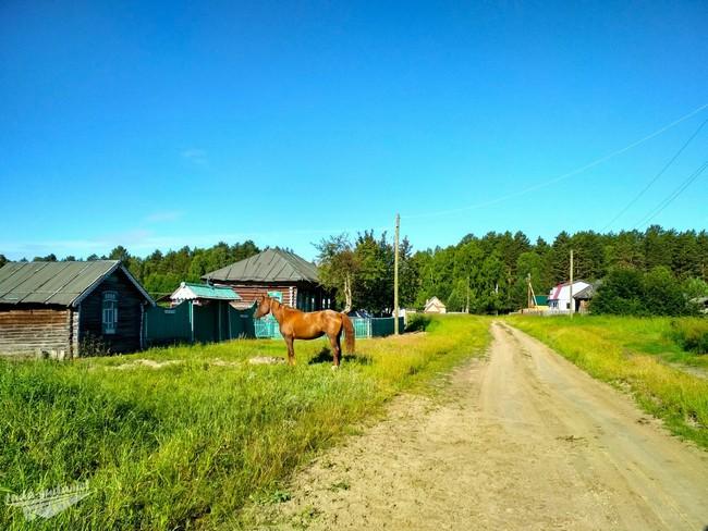 Деревня Надеждинка Омская область