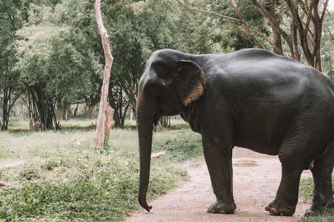 слон таиланд фото