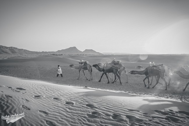 погода в пустыне сахара