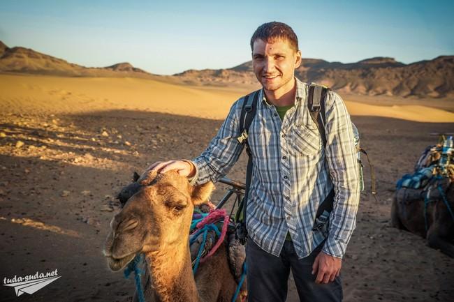 верблюд пустыня фото