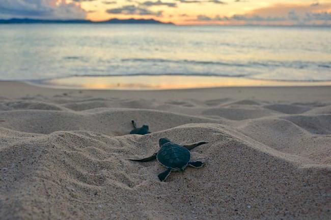 Turtle Island Park Sabah