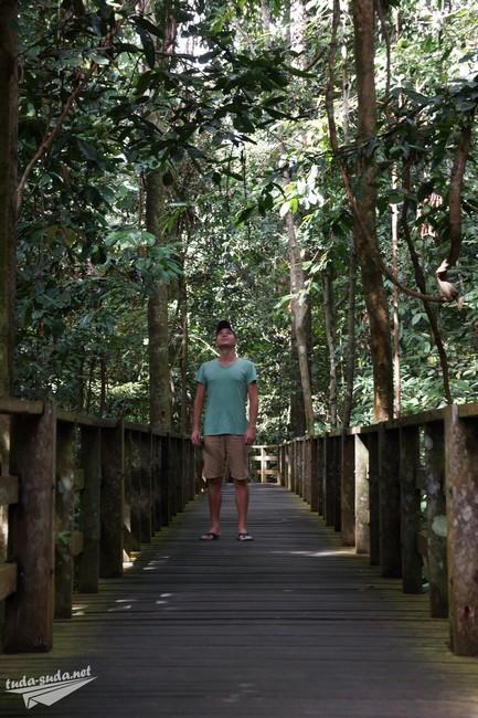 Центр реабилитации орангутанов Борнео