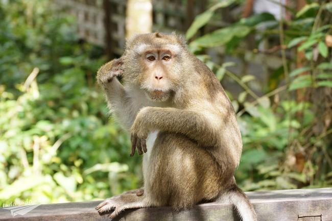 обезьяны Борнео