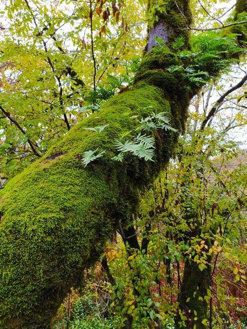 лес Сочи фото