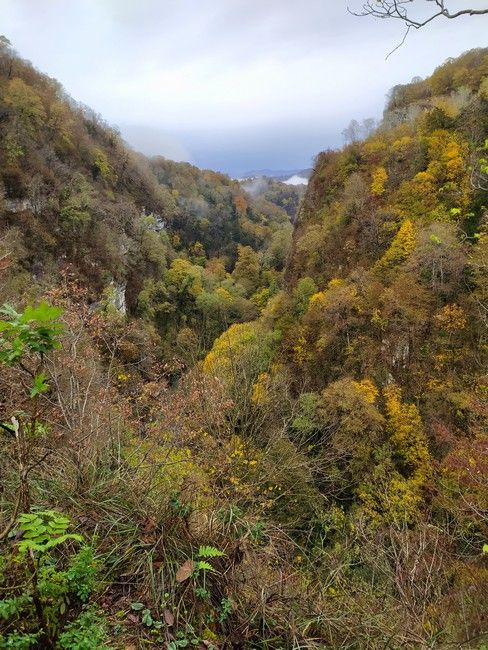 Сочи лес осень