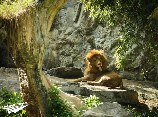 Чианг Май зоопарк