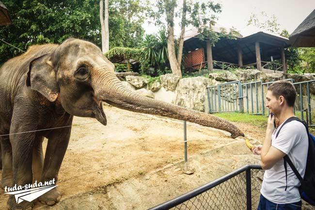 Слон зоопарк Чианг Май